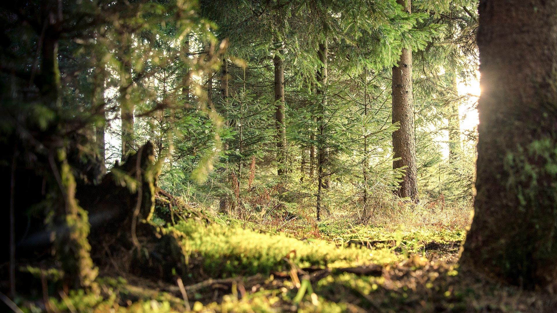 Organoid - natürliche Akustikpaneele, Dekoroberflächen und mehr